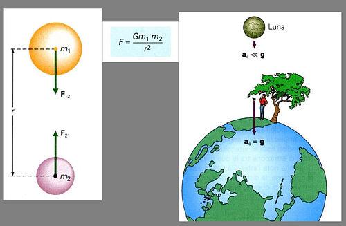 La Luna e la mela sono soggette alla forza di gravitazione.